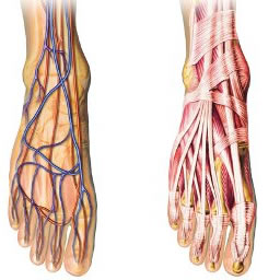 snijzaaldagen-onderbeen-enkel-voet-knie